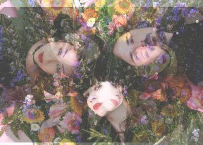 stargazer-lilies-img